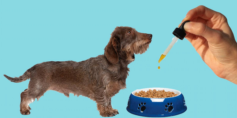 Pet CBD Oil Reviews