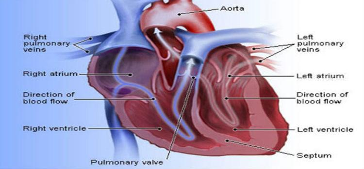 12 Tips For Preventing Heart Disease