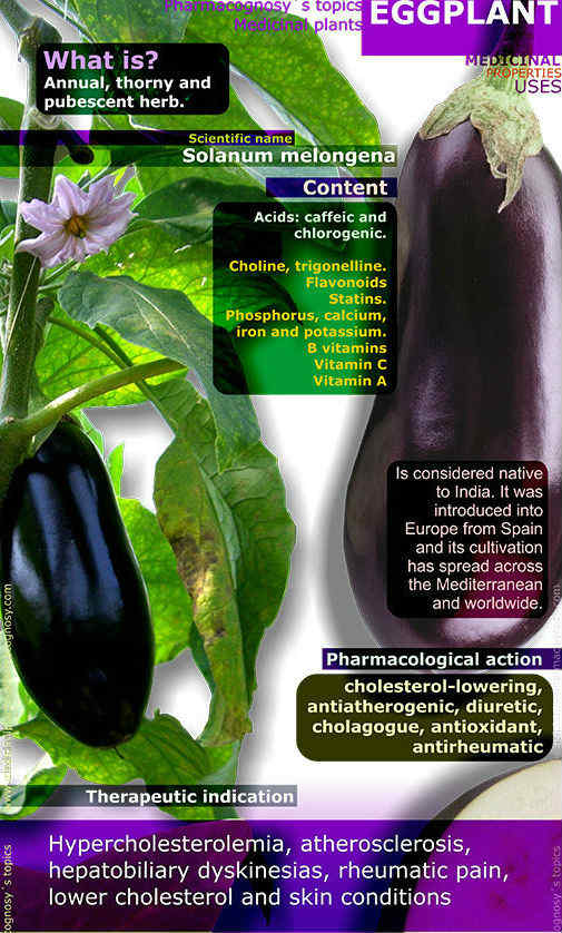 eggplant-benefits-infographic