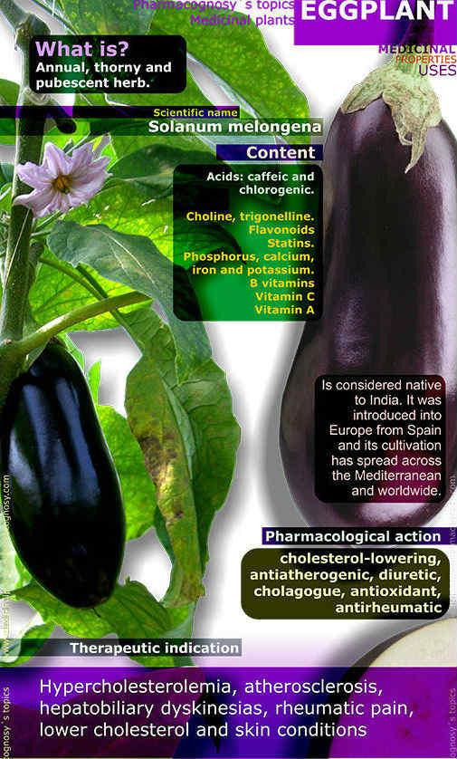 eggplant-benefits-infographic