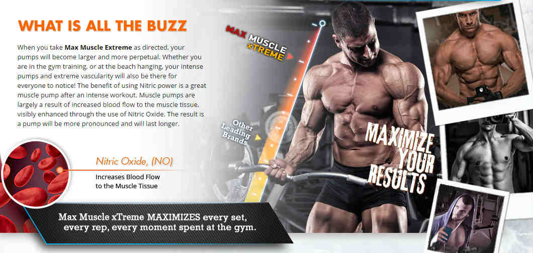 Max Muscle Extreme Ingredients - Testosterone