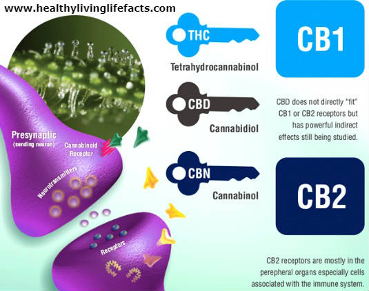 CBD Oil Effective Dose