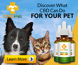 CBD oil for Pet