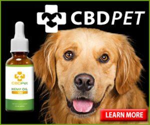 Pet CBD Oil