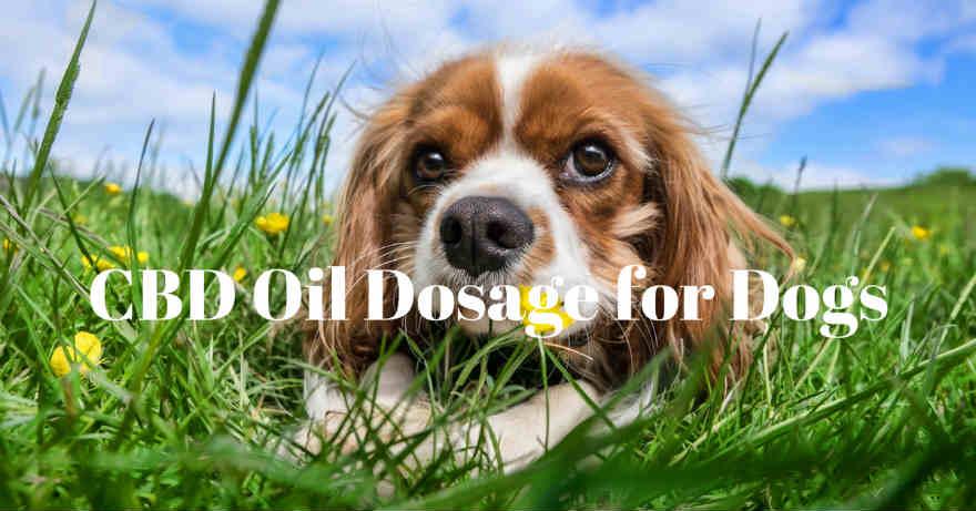 CBD Oil For Dogs , Pet CBD